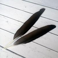 Перо галки из крыла 16-20 см