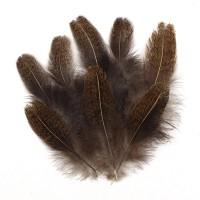 Набор покровных перьев фазана