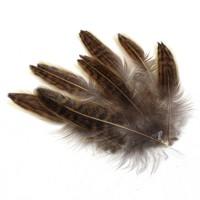 Набор воротниковых перьев фазана