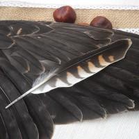 Перо сокола пустельги 14 см