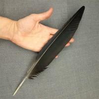 Перо ворона из крыла 30 см