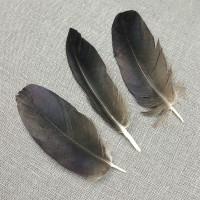 Перо ворона из крыла 5-7 см
